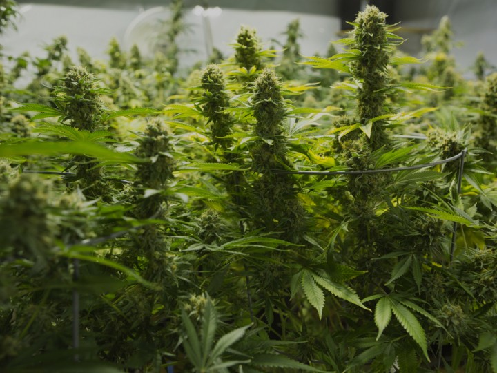 Yahoo News: Colorado's monthly marijuana sales top $100 million