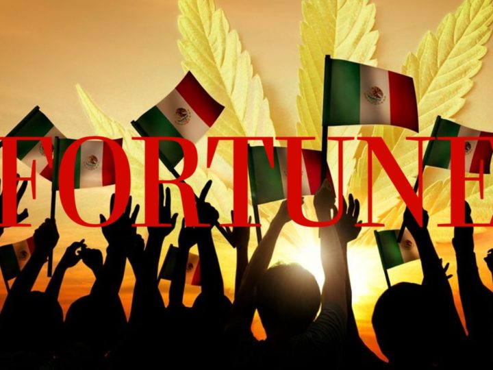 Fortune: Mexico is the Next Big Marijuana Market