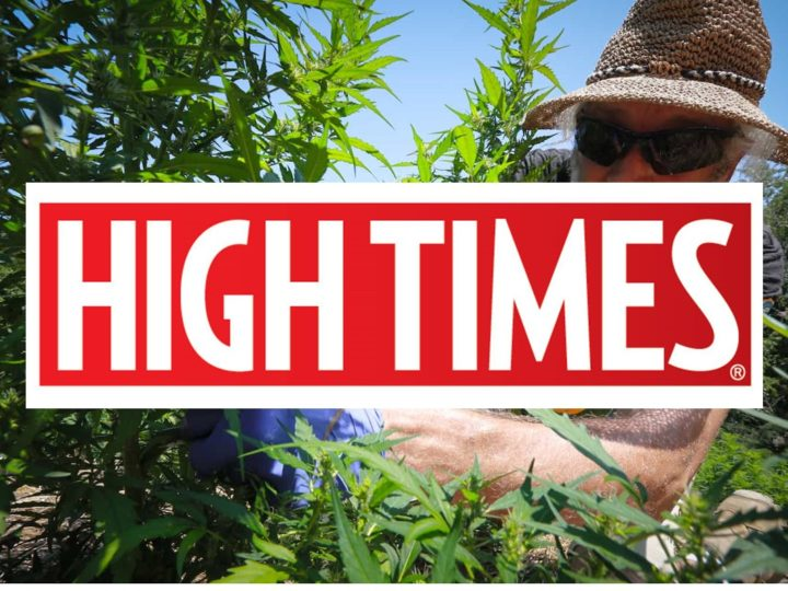 High Times: North Carolina Is Harvesting Its First Legal Hemp Crop in Decades